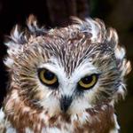 Zorg1's avatar